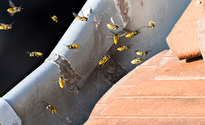 Bee Removal St. Louis